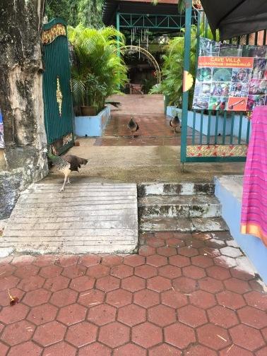 バツー洞窟(Batu Caves) 鶏